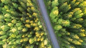 Flyg- sikt av skogen och vägen royaltyfri bild