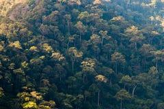 Flyg- sikt av skogen, textur av skogen i en flyg- sikt, Thailan Fotografering för Bildbyråer