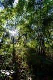 Flyg- sikt av skogen, textur av skogen i en flyg- sikt, Thailand Arkivbilder