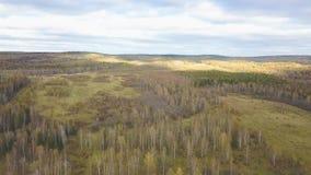 Flyg- sikt av skogen under moln av under höstaftonen gem Bästa sikt av skogområdet i höst stock video