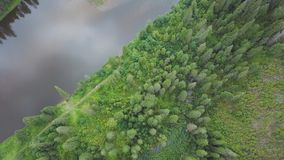 Flyg- sikt av skogfloden under sommar gem Flyg- sikt av skogsmarker med floden i sommaren under ett flyg Royaltyfri Bild
