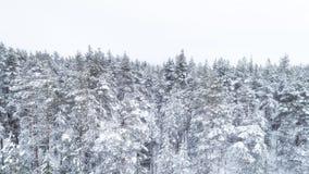 Flyg- sikt av snöig träd för en vinterskog royaltyfri fotografi