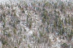 Flyg- sikt av träd som täckas av insnöat en skog, på sidan av det Subasio berget Umbria som skapar en sort av abstrakt begrepp Arkivfoton