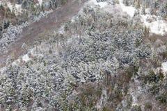 Flyg- sikt av träd som täckas av insnöat en skog, på sidan av det Subasio berget Umbria som skapar en sort av abstrakt begrepp Arkivfoto