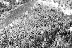 Flyg- sikt av träd som täckas av insnöat en skog, på sidan av det Subasio berget Umbria som skapar en sort av abstrakt begrepp Royaltyfria Bilder