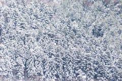 Flyg- sikt av träd som täckas av insnöat en skog, på sidan av det Subasio berget Umbria som skapar en sort av abstrakt begrepp Royaltyfri Fotografi