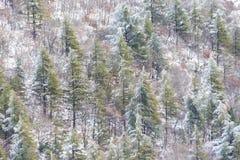 Flyg- sikt av träd som täckas av insnöat en skog, på sidan av det Subasio berget Umbria som skapar en sort av abstrakt begrepp Fotografering för Bildbyråer