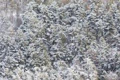 Flyg- sikt av träd som täckas av insnöat en skog, på sidan av det Subasio berget Umbria som skapar en sort av abstrakt begrepp Royaltyfri Bild