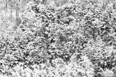 Flyg- sikt av träd som täckas av insnöat en skog, på sidan av det Subasio berget Umbria som skapar en sort av abstrakt begrepp Arkivbild