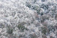Flyg- sikt av träd som täckas av insnöat en skog, på sidan av det Subasio berget Umbria som skapar en sort av abstrakt begrepp Royaltyfri Foto
