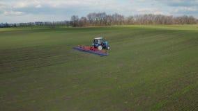 Flyg- sikt av traktoren, arbeten fältet tidigt på våren på en solig dag De första forsarna av vete är synliga stock video