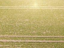 Flyg- sikt av traktorspår i ett skördfält Arkivbilder