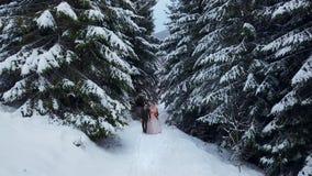 Flyg- sikt av unga gifta sig par som går och har gyckel som rymmer händer i snöväderpinjeskog under snöfall