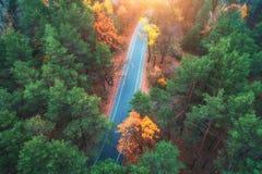 Flyg- sikt av vägen i härlig grön skog på solnedgången Royaltyfria Bilder
