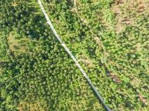 Flyg- sikt av vägen till och med en palmträdskog Royaltyfria Foton