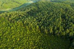 Flyg- sikt av vårskogen Royaltyfri Fotografi