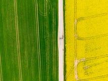 Flyg- sikt av v?gen mellan gr?na och gula f?lt ?kerbrukt surrskott av canolarapsfr?f?ltet och f?ltet f?r gr?n sk?rd ekologi fotografering för bildbyråer