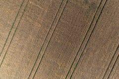 Flyg- sikt av vetefältet och spår från jordbruks- textur för traktor eller bakgrund av det åkerbruka landskapet för sommar Arkivfoto