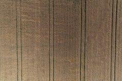 Flyg- sikt av vetefältet och spår från jordbruks- textur för traktor eller bakgrund av det åkerbruka landskapet för sommar Royaltyfri Fotografi