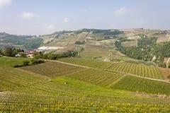 Flyg- sikt av vingårdarna av Langhe, Piedmont fotografering för bildbyråer