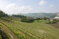 Flyg- sikt av vingårdarna av Langhe, Piedmont royaltyfria bilder