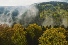 Flyg- sikt av vintergröna träd och den stora skogen Arkivbilder