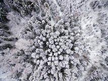Flyg- sikt av vinterskogen från surret Royaltyfri Fotografi