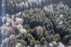 Flyg- sikt av vinterskogen med rimfrost på träden - surrs sikt, Tyskland arkivfoton