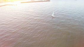 Flyg- sikt av yachten på havet nära kust på en ljus solnedgång med solsignalljus stock video