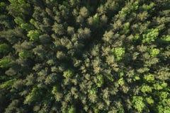Flyg- sikt för bästa sikt av den blandade skogen på en solig sommardag Fotografering för Bildbyråer