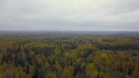Flyg- sikt för höstskogväg arkivfilmer