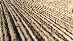 Flyg- sikt för jordbruksmark med det plogade fältet och fåror som drar den torra jorden stock video
