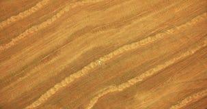flyg- sikt Flyg för vertikal rörelse över mannen som ligger på gult vetefält arkivfilmer