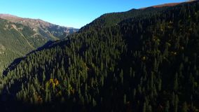 Flyg- sikt f?r bergmaxima naturlig skog stock video