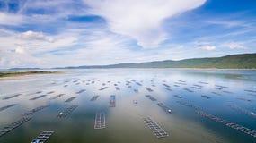 Flyg- sikt, fiskcoop, fiskburar, Khonkean, Thailand arkivbilder