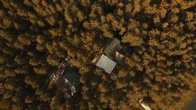 flyg- sikt Flyga över de härliga höstfälten och den härliga skogen stock video