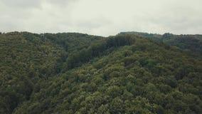 flyg- sikt Flyga över den härliga pinjeskoglandskappanoraman, flyttar sig kameran framåtriktat stock video