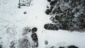 Flyg- sikt på fältet och delen av skogen arkivfilmer