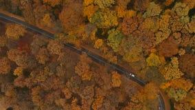 Flyg- sikt på vägen i höstskog arkivfilmer