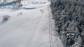 Flyg- sikt på vinterpinjeskog och snöbanan på en solig dag lager videofilmer