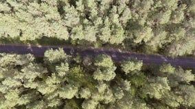 Flyg- sikt som flyger över den gamla lappade skogvägen för två gränd med träd för bilflyttninggräsplan av täta trän som växer båd arkivfilmer