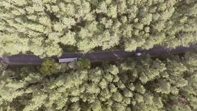 Flyg- sikt som flyger över den gamla lappade skogvägen för två gränd med träd för bilflyttninggräsplan av täta trän som växer båd lager videofilmer