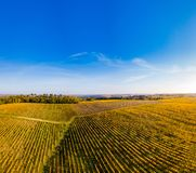 Flyg- sikt, vingårdsoluppgång i hösten, Bordeaux vingård, Frankrike royaltyfri bild