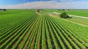 Flyg- sikter för vingård stock video