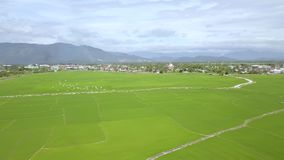 Flyg- skjutit fågelflockflyg över risfält på berglandskap Riskoloni i asiatisk by Bruka och arkivfilmer