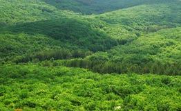 flyg- skoggreensikt Royaltyfria Foton