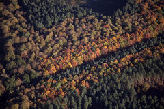flyg- skogsherwood arkivfoton
