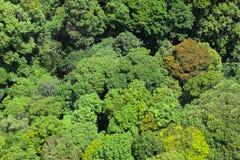 flyg- skogsikt Royaltyfria Foton