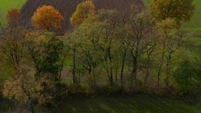 Flyg- skott av träd i häcken, vibrerande höstlövverk arkivfilmer
