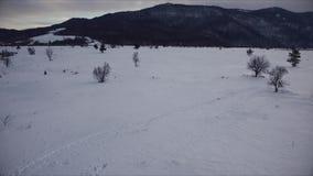 Flyg- skott Forest Covered med snö på vintern arkivfilmer